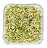 Brotes del bróculi y del rábano Fotos de archivo libres de regalías