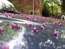 Brotes en el coche Imagen de archivo
