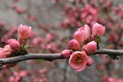 Brotes florecientes del árbol Fotos de archivo