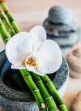 Brotes hermosos de la orquídea y de bambú imagen de archivo libre de regalías