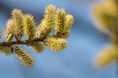 Brotes hermosos del árbol Foto de archivo