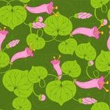 Brotes rosados Imagen de archivo libre de regalías
