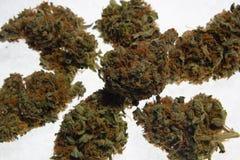 Brotes secados de la marijuana del cáñamo Fotografía de archivo