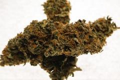 Brotes secados de la marijuana del cáñamo Foto de archivo libre de regalías