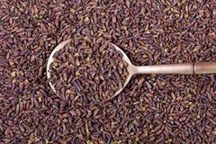 Brotes secados del abedul, cierre para arriba Foto de archivo