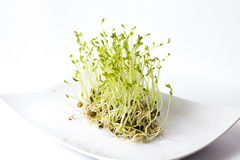 Brotes verdes de las lentejas Foto de archivo