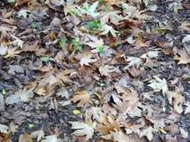 Brotes verdes en hojas de otoño imagen de archivo