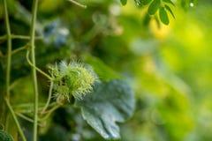 Brotes verdes en primavera Foto de archivo