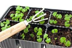 Brotes verdes que crecen de suelo y de un rastrillo de acero Fotografía de archivo