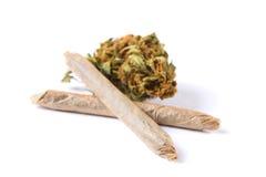 Brotes y juntas de la marijuana aislados en el fondo blanco Imagen de archivo libre de regalías