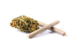 Brotes y juntas de la marijuana aislados en el fondo blanco Fotografía de archivo libre de regalías
