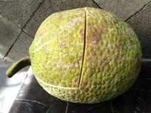 Brotfrucht, die bereit ist gekocht zu werden stockfoto