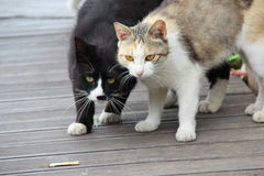 Brother Cats Royalty Free Stock Images
