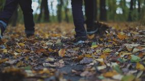 Brother, dos muchachos está caminando en las hojas de un otoño en un bosque almacen de metraje de vídeo