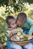 Brother hugging sister with apples. Brother hugging sister sitting on a chair and holding apples Royalty Free Stock Images