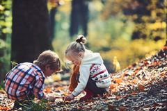 Brother and sister camping in autumn forest. Children pick acorns from oak trees. Little boy and girl friends have fun. On fresh air. Childhood and child stock photo