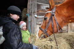 Brother and sister give brown horse hay Stock Photography