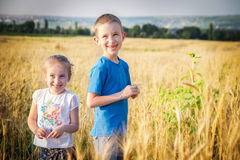 Brother and sister in golden wheat field Stock Images