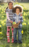 Brother And Sister Having Easter Egg Hunt. In Daffodil Field Smiling royalty free stock images