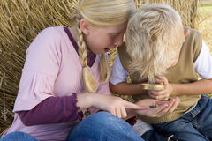 Brother and sister (9-13) by hay bale, looking through magnifying glass royalty free stock photography