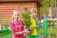 Brother and sister hold a seedling tree in hands Royalty Free Stock Image