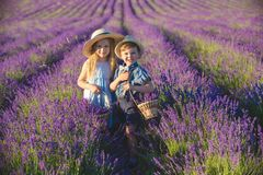 Brother and sister in lavender field royalty free stock photo
