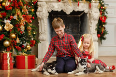 Brother and sister playing with Husky puppies for Christmas royalty free stock image