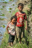 Brother and sister on a ricefield Royalty Free Stock Photography