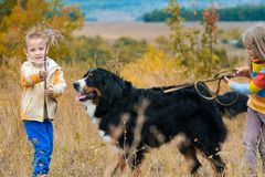 brother with sister walking dog on an autumn meadow Berner stock photos