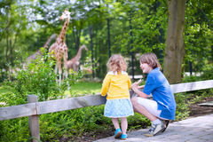 Brother and sister watching giraffes in a zoo. Happy laughing boy and his toddler sister cute little girl with curly hair wearing a dress having fun together in Stock Photo