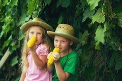 Brother y hermana en sombreros de paja que comen el maíz en el aire fresco Fotos de archivo