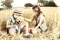 Brother y hermana en un campo de trigo con un perro Fotografía de archivo