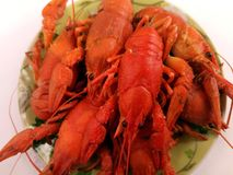 Brotherhood of red crawfish, Boiled crawfish with dill, Cancers to beer, beer snacks royalty free stock photography