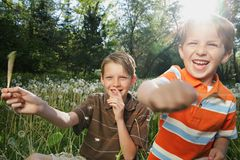 Brothers. Two young Caucasian boys playing with dandelions outdoors in summer Royalty Free Stock Image
