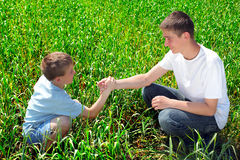 Brothers in the field Royalty Free Stock Image