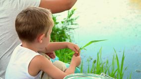 Brothers fishing in the open air. The elder brother with two younger brothers fishes on the lake in the countryside. stock footage