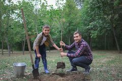 The brothers are going to plant a tree. Family work. Process of planted tree at the forest. Royalty Free Stock Photos