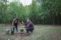 The brothers are going to plant a tree. Family work. Process of planted tree at the forest. Stock Photo