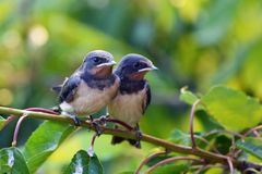 Brothers in nest royalty free stock photos