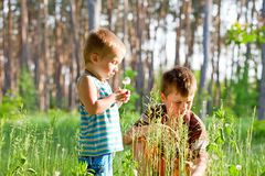 Brothers outdoors in dandelions Royalty Free Stock Images