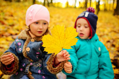 Brothers and sister playing outside in Autumn leaves. Brothers and sister playing outside in Autumn leaves Stock Photo