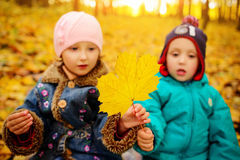 Brothers and sister playing outside in Autumn leaves. Brothers and sister playing outside in Autumn leaves Stock Photos
