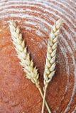 Brotlaib und Weizenähren Lizenzfreies Stockbild