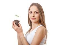 Broto da planta verde na mão fêmea Fotografia de Stock