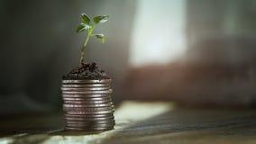 Broto das moedas Conceito do aumento do crescimento de dinheiro vídeos de arquivo