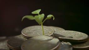 Broto das moedas Conceito do aumento do crescimento de dinheiro filme
