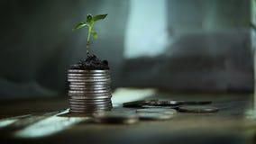 Broto das moedas Conceito do aumento do crescimento de dinheiro video estoque