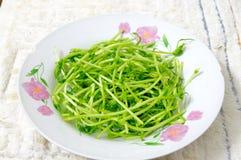 Broto de soja vegetal Foto de Stock