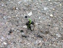 Broto do crescimento que faz sua maneira através do asfalto fotografia de stock royalty free