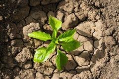 Broto na terra seca Fotografia de Stock